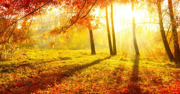 How many days until Autumn (or Fall)?